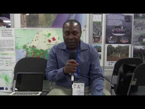 Congo Basin NGO