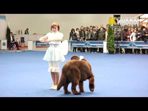 Dog Show 'Eurasia  2012 / Russia / Moscow'. Freestyle.
