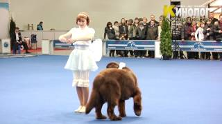 """Download Dog Show """"Eurasia  2012 / Russia / Moscow"""". Freestyle. Mp3 and Videos"""
