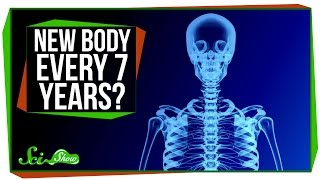 Do You Really Have a New Body Every 7 Years? by : SciShow