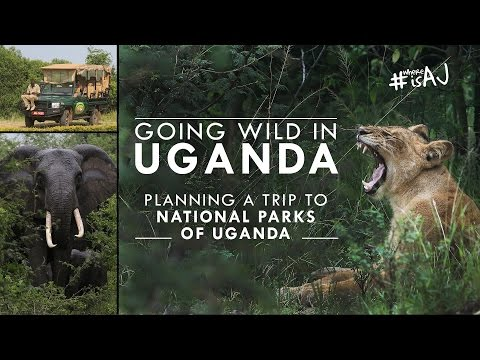 Uganda: Planning a Trip to National Parks | #WhereisAJ?