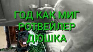 ОДИН ГОД-ОДИН МИГ. Ротвейлер день за днём