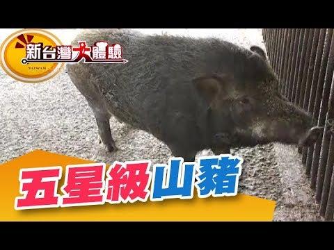 到府新商機 養豬新招《新台灣大體驗》第220集