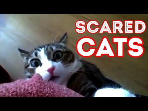 wild cat brothel