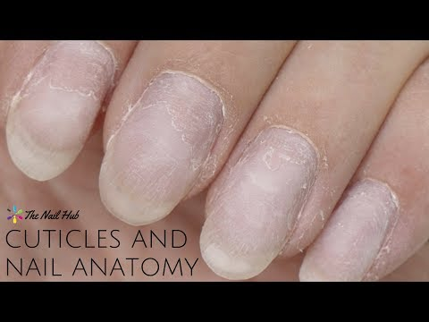 Cuticles & Nail Anatomy