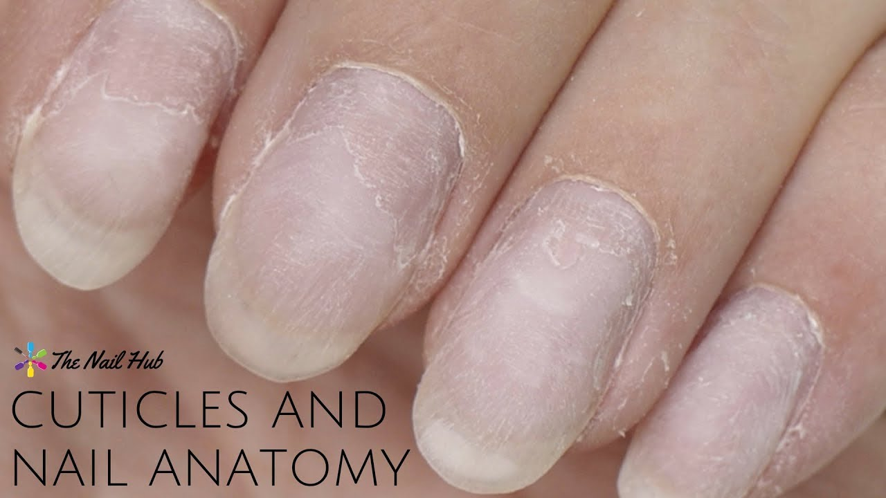 Cuticles Nail Anatomy