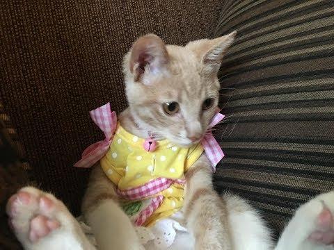 Cute video of kittens