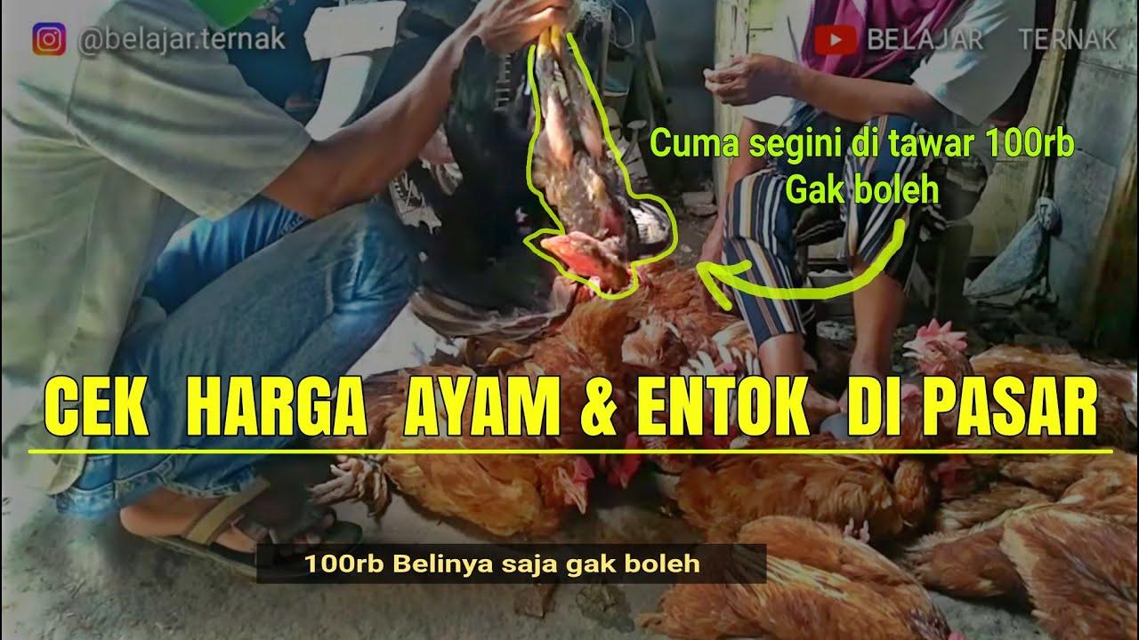 Cek harga ayam & entok di pasar | Pengepul bisa untung hingga 40%