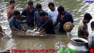 Amazing Baby Fish Hunting In a Pond With The Large Net Baby Fishing in a Pond