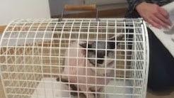 Kissan stabilointi häkissä
