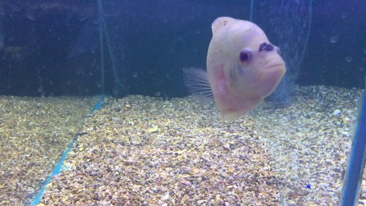 What are the most aggressive tropical fish in the shop for 405 tropical fish