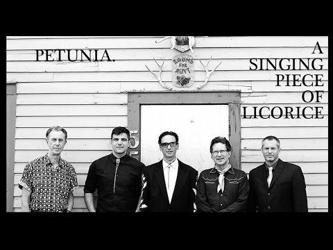 Petunia - A Singing Piece of Licorice
