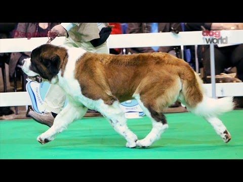 Midland Counites Dog Show 2015 - Working group Shortlist