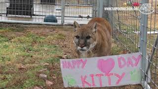 Happy Heart Day, Kitty!