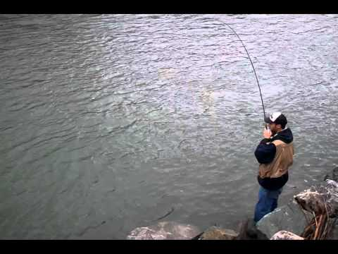 Catching A Nooksack River Coho (silver) Salmon