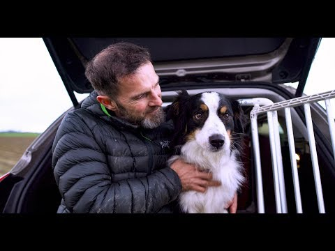 Ford Offers Optimal Solution For Transporting Dogs