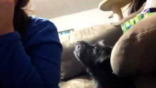 Dog Vs. Harmonica