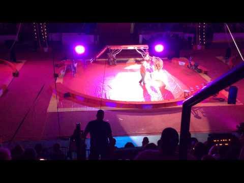 Shrine circus bears dancing psy's gangnam style