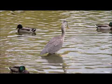 The Seneca Park review 1