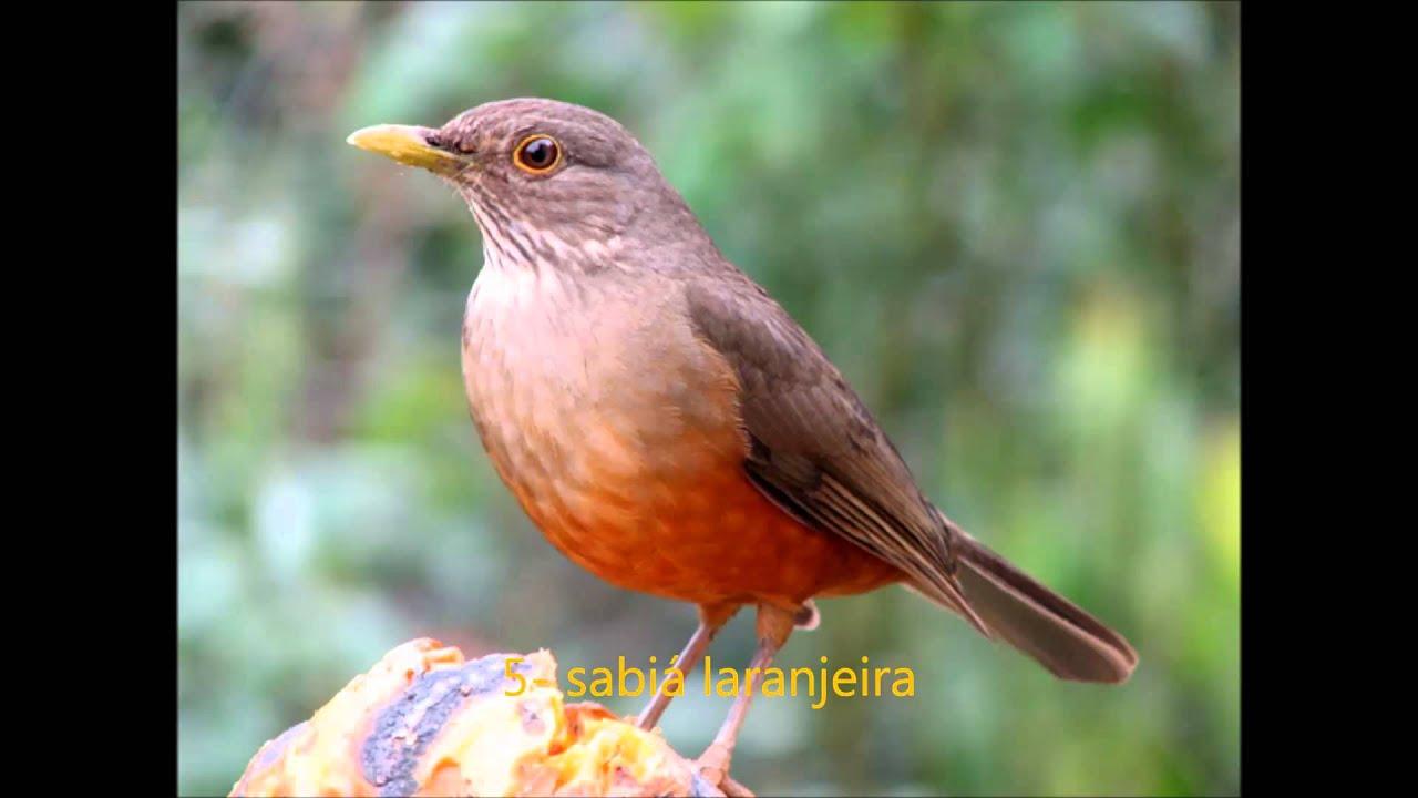 Suficiente As 8 aves mais cobiçadas do Brasil. - YouTube ES22