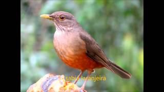 As 8 aves mais cobiçadas do Brasil.