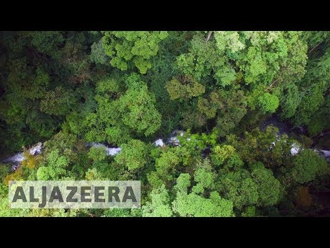 🇨🇷 Costa Rica struggles to regrow forests