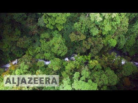 ?? Costa Rica's reforestation efforts promising