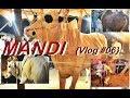 Mandi Vlog (06) | Pindi boys in mandi | Pindi mandi | Pindism