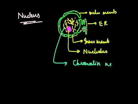protoplasmic level of organization