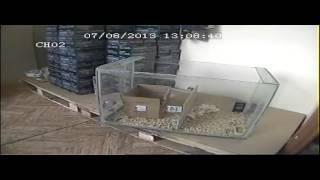 видео ГРАД А-550УЗ Ультразвуковой отпугиватель грызунов и кротов