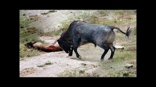 Best Strong Lion vs Bull Buffalo Fight Animal Attack Nature Wildlife Leopard Snake