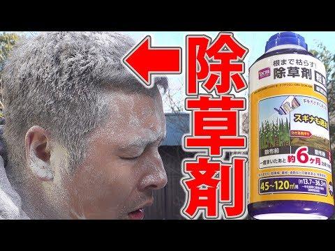 【ドッキリ】除草剤を頭髪にぶっかけたら大事故にwww