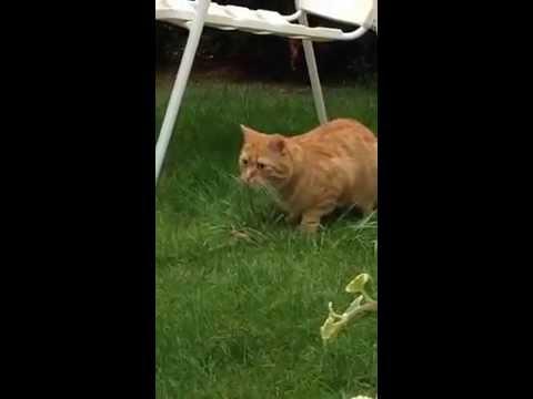 Kotzende Katze