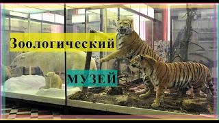 видео Зоологический музей РАН