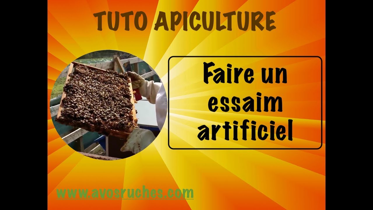 tuto apiculture comment faire un essaim artificiel au doovi. Black Bedroom Furniture Sets. Home Design Ideas