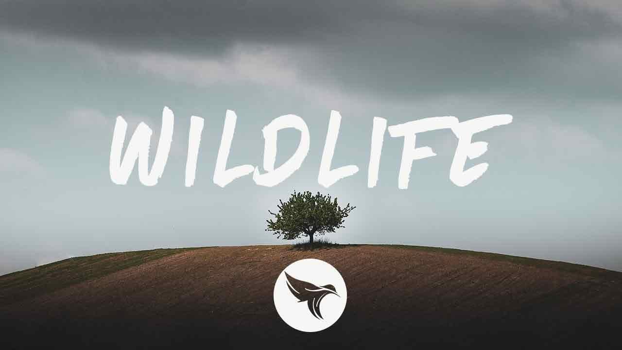 Jauz & Karra - Wildlife (Lyrics)