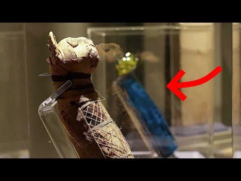 Египте обнаружена мумия кошки за 23 января