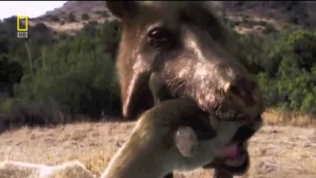 R Hogs GNARLY KILLER PIGS! - ...