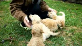 Susan's Little Puppies.mov