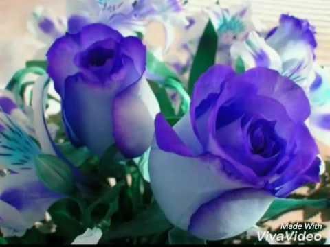 Una Rosa Para Otra Rosa Jva Youtube
