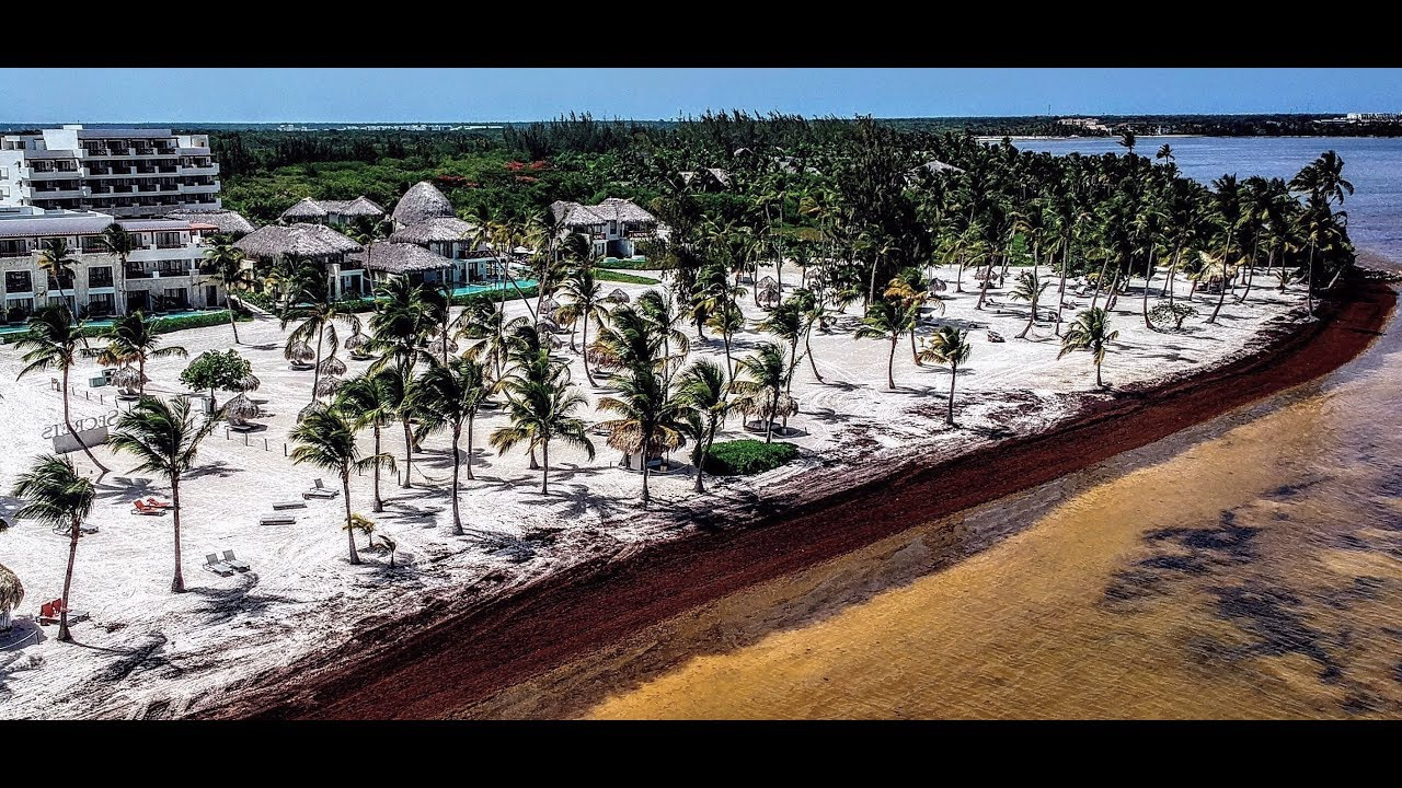 Punta Cana seaweed problem Cap Cana(Read full description) - YouTube