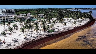 Punta Cana seaweed problem Cap Cana(Read full description)
