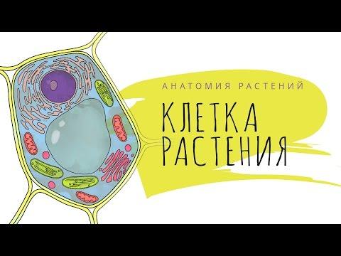 Клетка растения. Анатомия растений 1