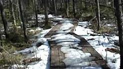 Johnville Bog, Quebec, Canada