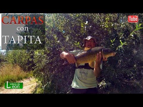 Pescar carpas con tapas en choele choel en rio negro youtube for Carpa de rio