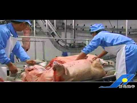 pig slaughter video