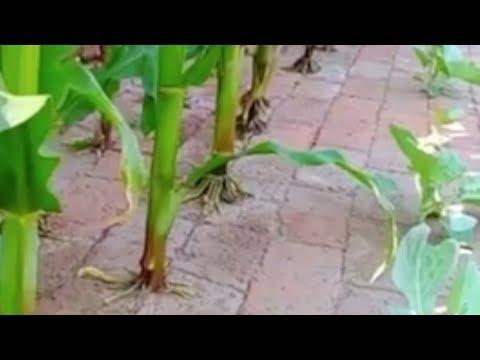 Огород между плитами. Идея для огорода - китайский огород. Огород без проблем. Мини огород нано идея