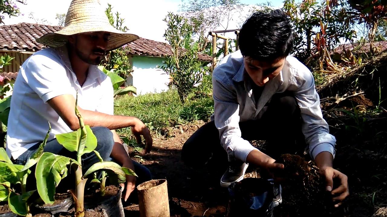 Como se hace un vivero o semillero de platano youtube for Como establecer un vivero