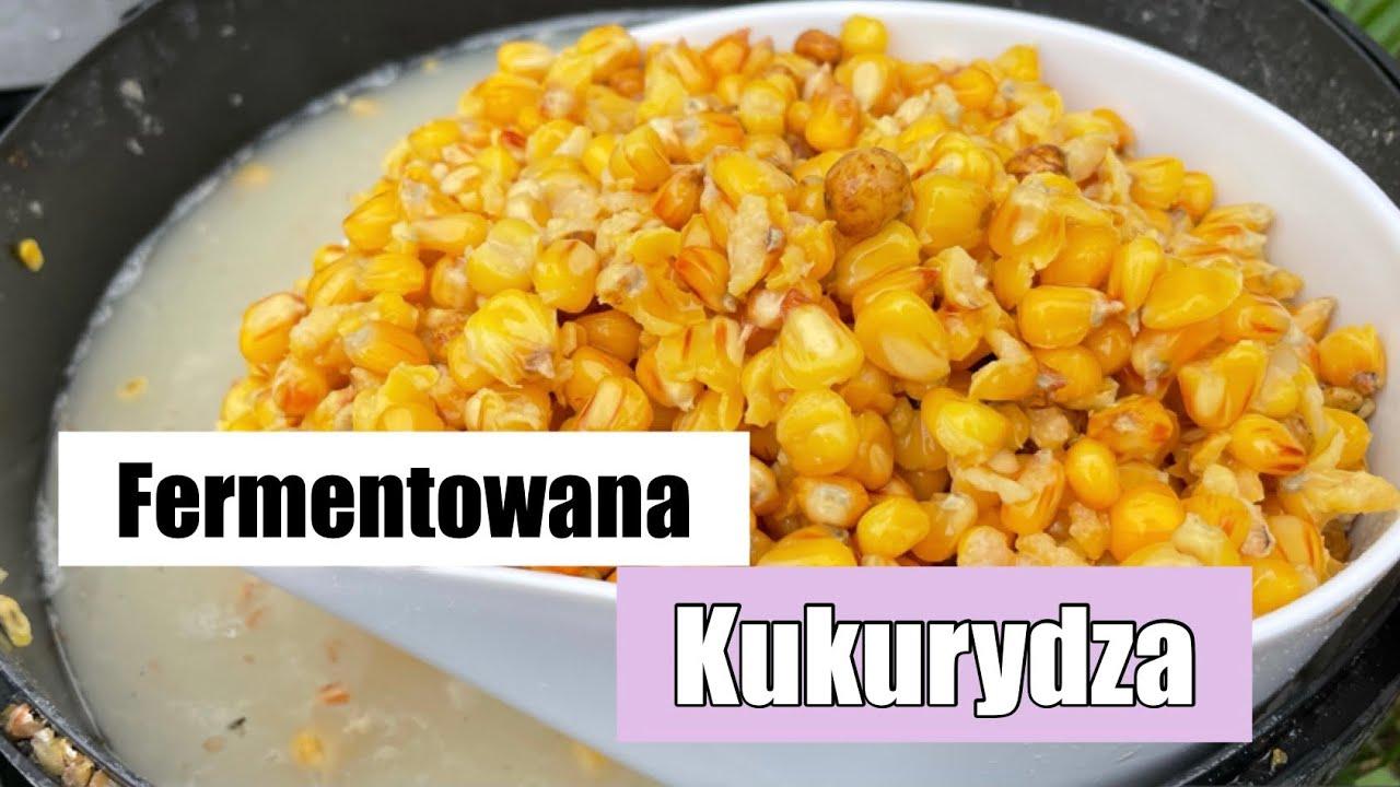 Fermentowana Kukurydza Na Karpie i Amury Jak Przygotować ?