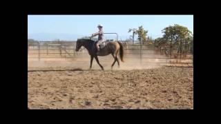 Rocky Mountain Horse Gem 10-06-14